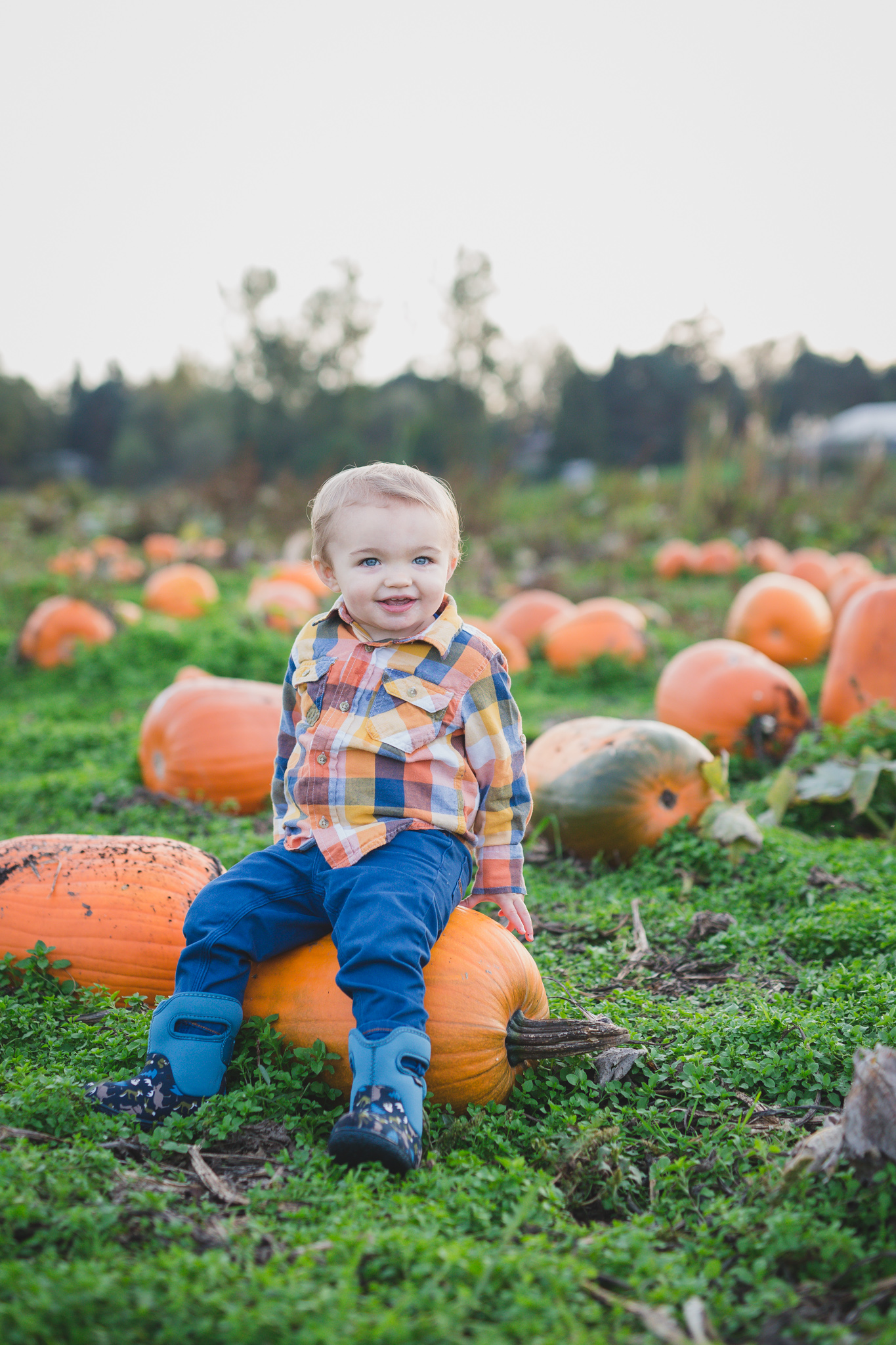 pumpkin patch baby photo, rondriso farms, family photographer, fraser valley, wink photography, fall mini session, cloverdale photographer, family photographer