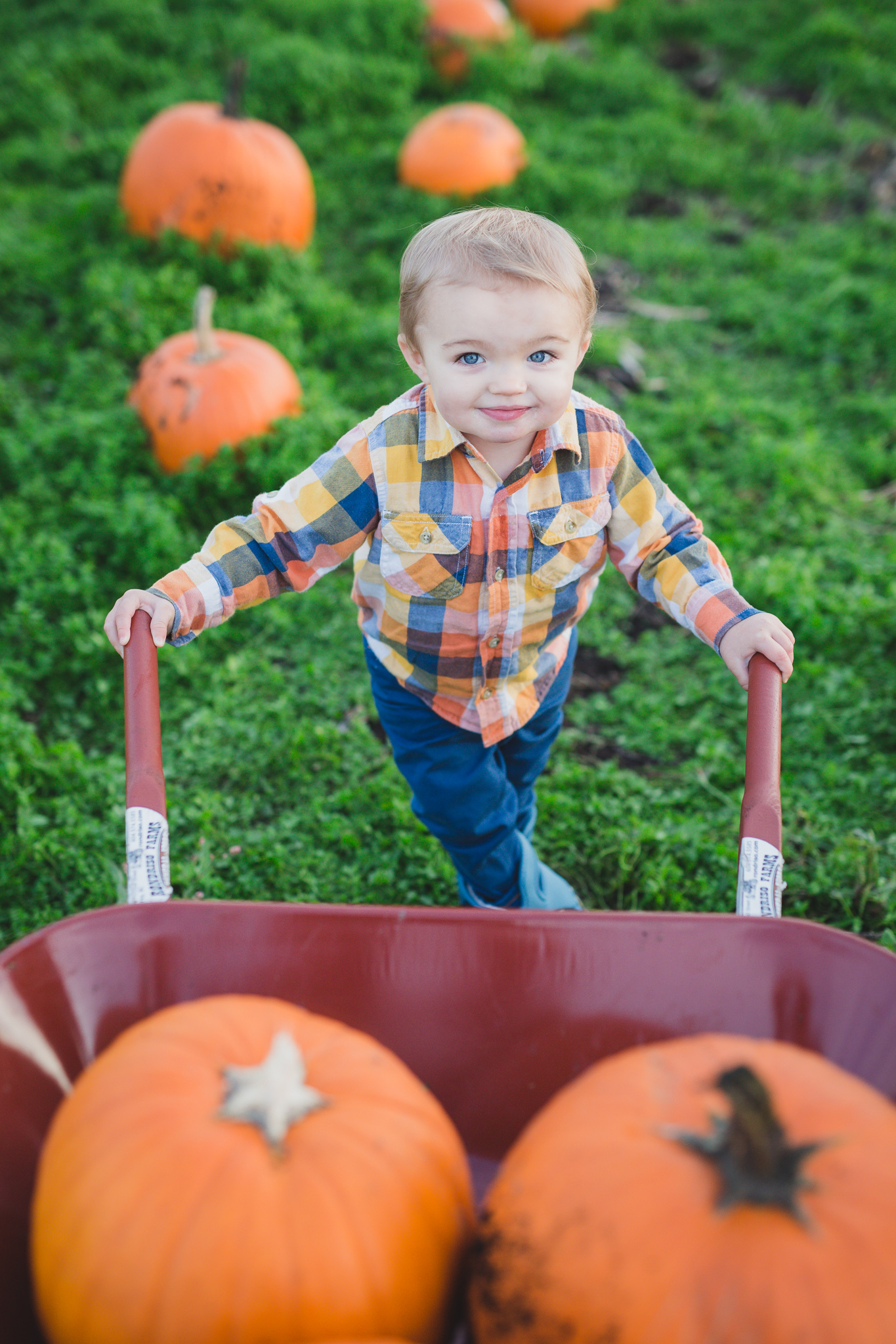rondriso farms pumpkin patch, wink photography, vancouver family photographer, family photographer cloverdale, cloverdale, pumpkin patch photos, rondriso farms