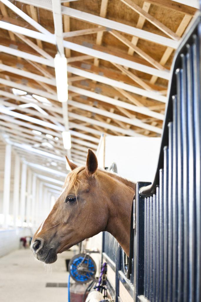 horse barn engagement shoot tsawassen